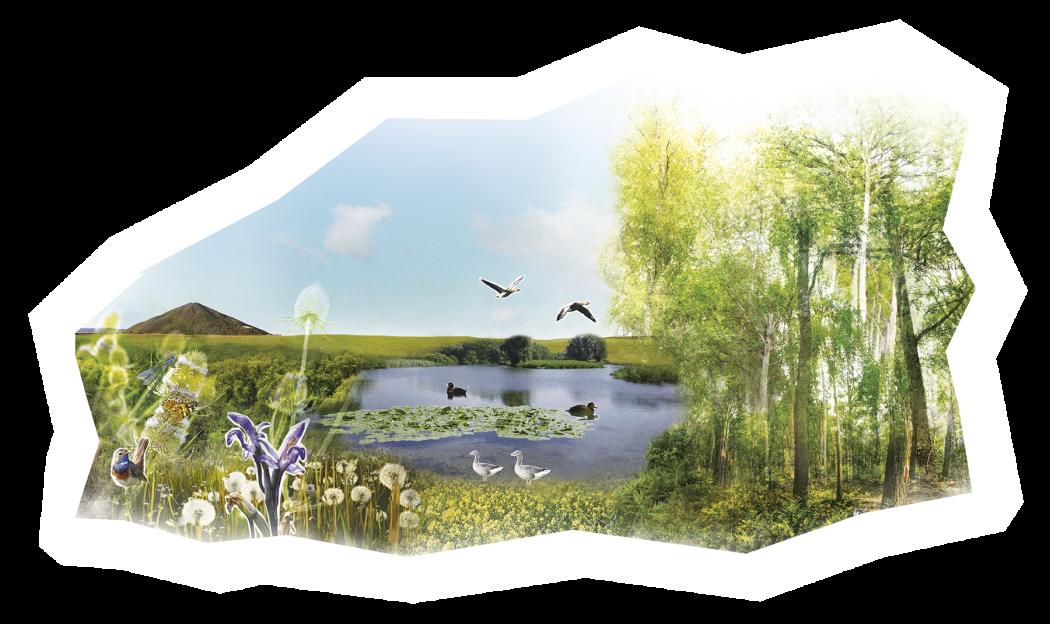 infographie biodiversite /